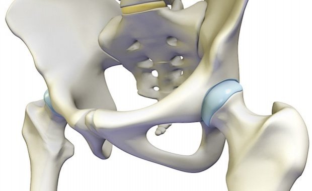 anatomical image of hip - posture